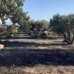 , Ο Β. Αποστόλου από το μέτωπο της πυρκαγιάς στην Ελαφόνησο, Eviathema.gr | Εύβοια Τοπ Νέα Ειδήσεις
