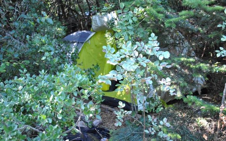 Αστυνομικοί εντόπισαν φυτεία κάνναβης στον Παρνασσό, αλλά δεν βρήκαν τους χασισοκαλλιεργητές sxhtyww1