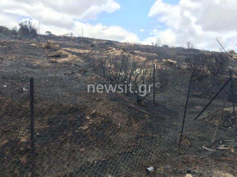 Φωτιά στο Λαγονήσι: Από τύχη δεν θρηνήσαμε θύματα lagonisi fotia3 768x576