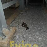, Κουνάβι ο λόγος των black out χθές το βράδυ στην Ερέτρια, Eviathema.gr | Εύβοια Τοπ Νέα Ειδήσεις