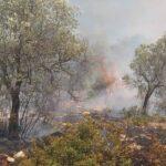 , Κεφαλονιά: Δύο πυρκαγιές το μεσημέρι της Κυριακής, Eviathema.gr | Εύβοια Τοπ Νέα Ειδήσεις