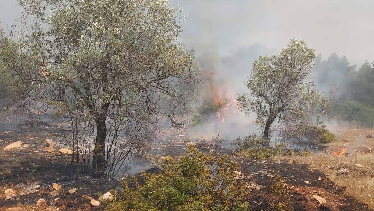, Κεφαλονιά: Δύο πυρκαγιές το μεσημέρι της Κυριακής, Eviathema.gr | ΕΥΒΟΙΑ ΝΕΑ - Νέα και ειδήσεις από όλη την Εύβοια
