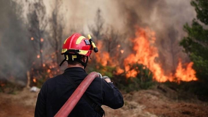 πυρκαγιά, Πυρκαγιά το μεσημέρι της Παρασκευής στην Ηλεία, Eviathema.gr | ΕΥΒΟΙΑ ΝΕΑ - Νέα και ειδήσεις από όλη την Εύβοια