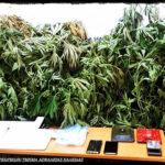 , Αλιβέρι Ευβοίας: Εντοπισμός της Δίωξης Ναρκωτικών Φυτείας με 40 δενδρύλλια [ΒΙΝΤΕΟ], Eviathema.gr   Εύβοια Τοπ Νέα Ειδήσεις