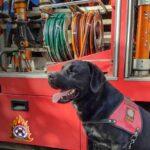 , Η «τρυφερή» ανάρτηση της Πυροσβεστικής για την Παγκόσμια Ημέρα των Ζώων, Eviathema.gr | Εύβοια Τοπ Νέα Ειδήσεις