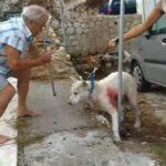 , Σκληρές εικόνες: Bίντεο από τον βασανισμό του σκύλου στη Νίκαια, Eviathema.gr   Εύβοια Τοπ Νέα Ειδήσεις