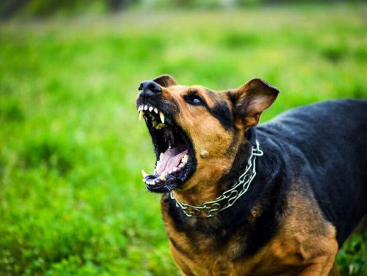 Άγρια επίθεση σκυλιών σε 62χρονη