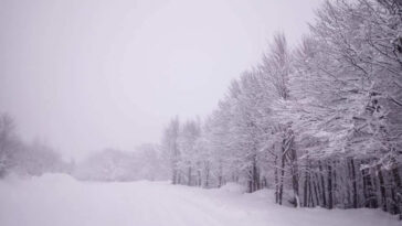 Εύβοια Νέα Χιόνι