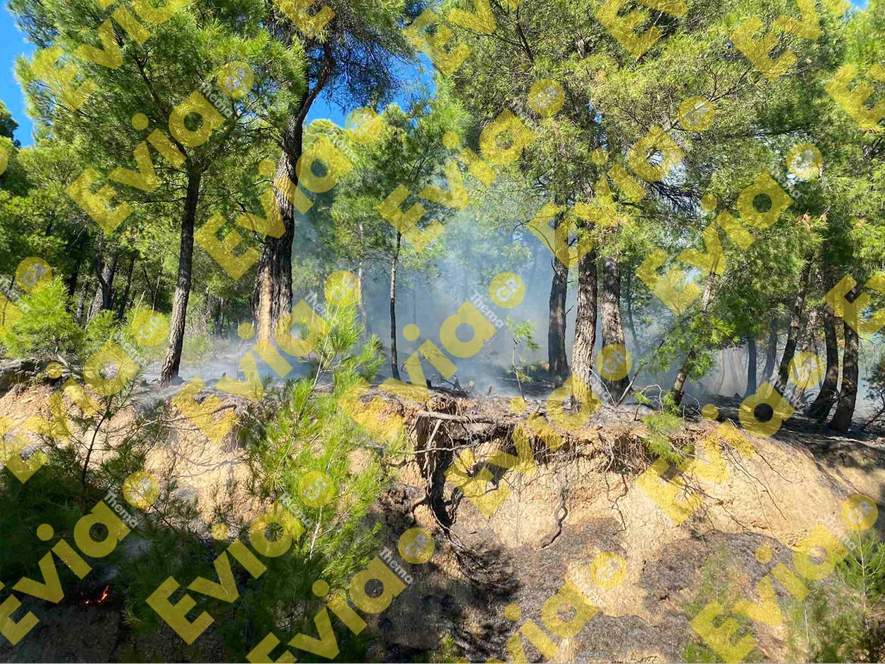 , ΕΚΤΑΚΤΟ Πυρκαγιά στον Μίστρο Ευβοίας λίγο μετά τις 1 το μεσημέρι της Παρασκευής [ΑΠΟΚΛΕΙΣΤΙΚΕΣ ΦΩΤΟΓΡΑΦΙΕΣ], Eviathema.gr | Εύβοια Τοπ Νέα Ειδήσεις