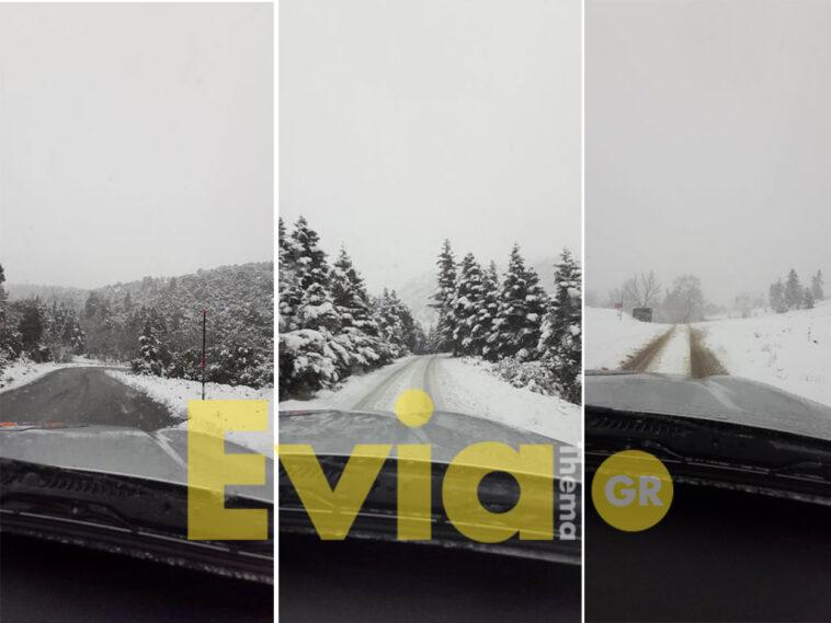 Σέτα Ευβοίας: Τους 10 πόντους έφτασε το χιόνι, Σέτα Ευβοίας: Τους 10 πόντους έφτασε το χιόνι – Απίστευτη χιονοθύελλα στην Αμπουδιώτισσα [ΦΩΤΟΓΡΑΦΙΕΣ – ΒΙΝΤΕΟ], Eviathema.gr | Εύβοια Τοπ Νέα Ειδήσεις