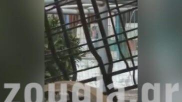 Νηπιαγωγείου Αγίου Νικολάου Χαλκίδας, ΣΟΚ στην Χαλκίδα Ευβοίας: Νηπιαγωγός έβγαλε 4χρονο κορίτσι στην Αυλή για να το τιμωρήσει [ΒΙΝΤΕΟ], Eviathema.gr | ΕΥΒΟΙΑ ΝΕΑ - Νέα και ειδήσεις από όλη την Εύβοια
