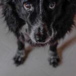 , Τουρκία : Σκύλος περίμενε τον ιδιοκτήτη του επί μέρες έξω από το νοσοκομείο που νοσηλευόταν, Eviathema.gr | Εύβοια Τοπ Νέα Ειδήσεις
