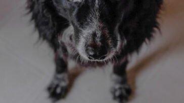 πραγματικά πιστό σκυλάκι πέρασε ολόκληρες ημέρες, Τουρκία : Σκύλος περίμενε τον ιδιοκτήτη του επί μέρες έξω από το νοσοκομείο που νοσηλευόταν, Eviathema.gr   Εύβοια Τοπ Νέα Ειδήσεις