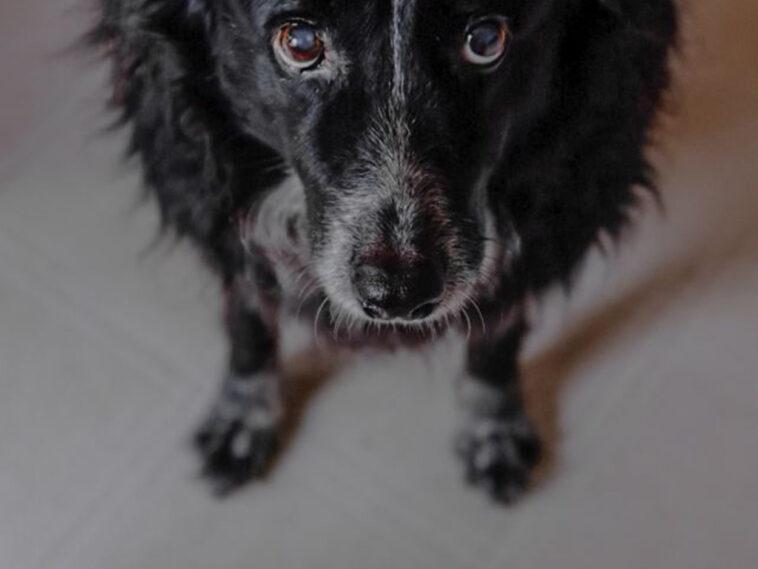 Τουρκία Σκύλος