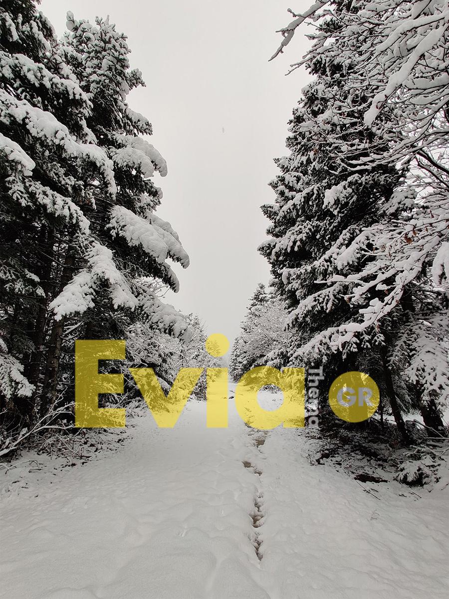 Μαγευτικό το τοπίο στην Στενή Διρφύος στην Εύβοια, Εύβοια: Αγνώριστη η Στενή στην Δίρφυ – Κυριολεκτικά καλύφθηκαν όλα από το χιόνι [ΦΩΤΟΓΡΑΦΙΕΣ], Eviathema.gr | ΕΥΒΟΙΑ ΝΕΑ - Νέα και ειδήσεις από όλη την Εύβοια