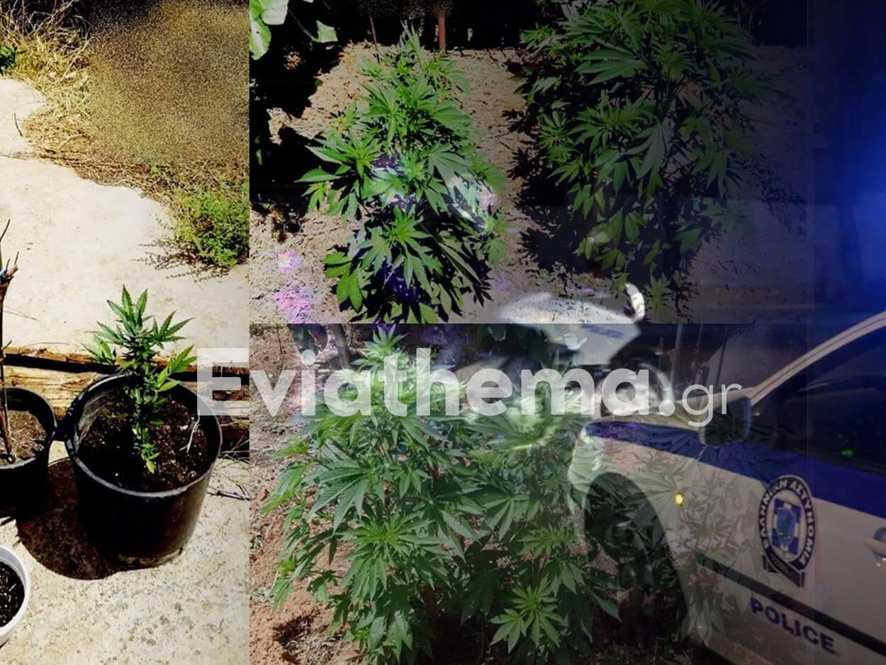 Κονίστρες Ευβοίας: 38χρονος είχε μετατρέψει το σπίτι του σε κέντρο παραγωγής ναρκωτικών, Κονίστρες Ευβοίας: 38χρονος είχε μετατρέψει το σπίτι του σε κέντρο παραγωγής ναρκωτικών – Τι εντόπισαν οι αστυνομικοί του ΑΤ Κύμης, Eviathema.gr | Εύβοια Τοπ Νέα Ειδήσεις