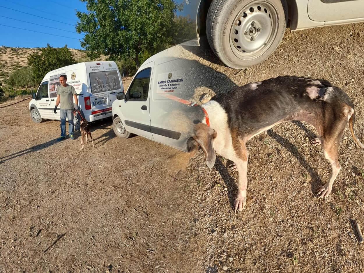 Αφράτι: Σκύλος βρέθηκε σε άθλια κατάσταση