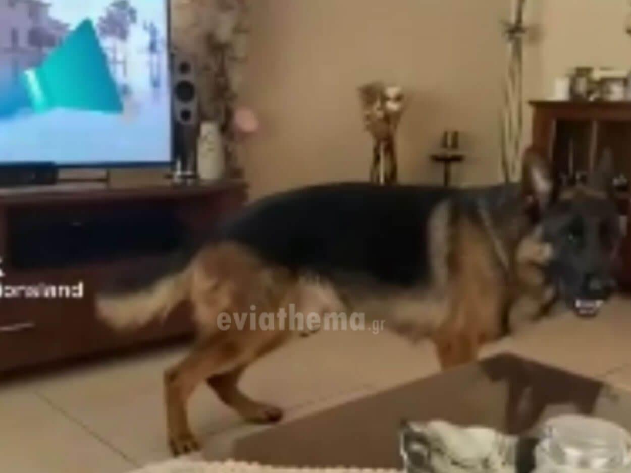 viral στο tik tok χορεύοντας ζεϊμπέκικο