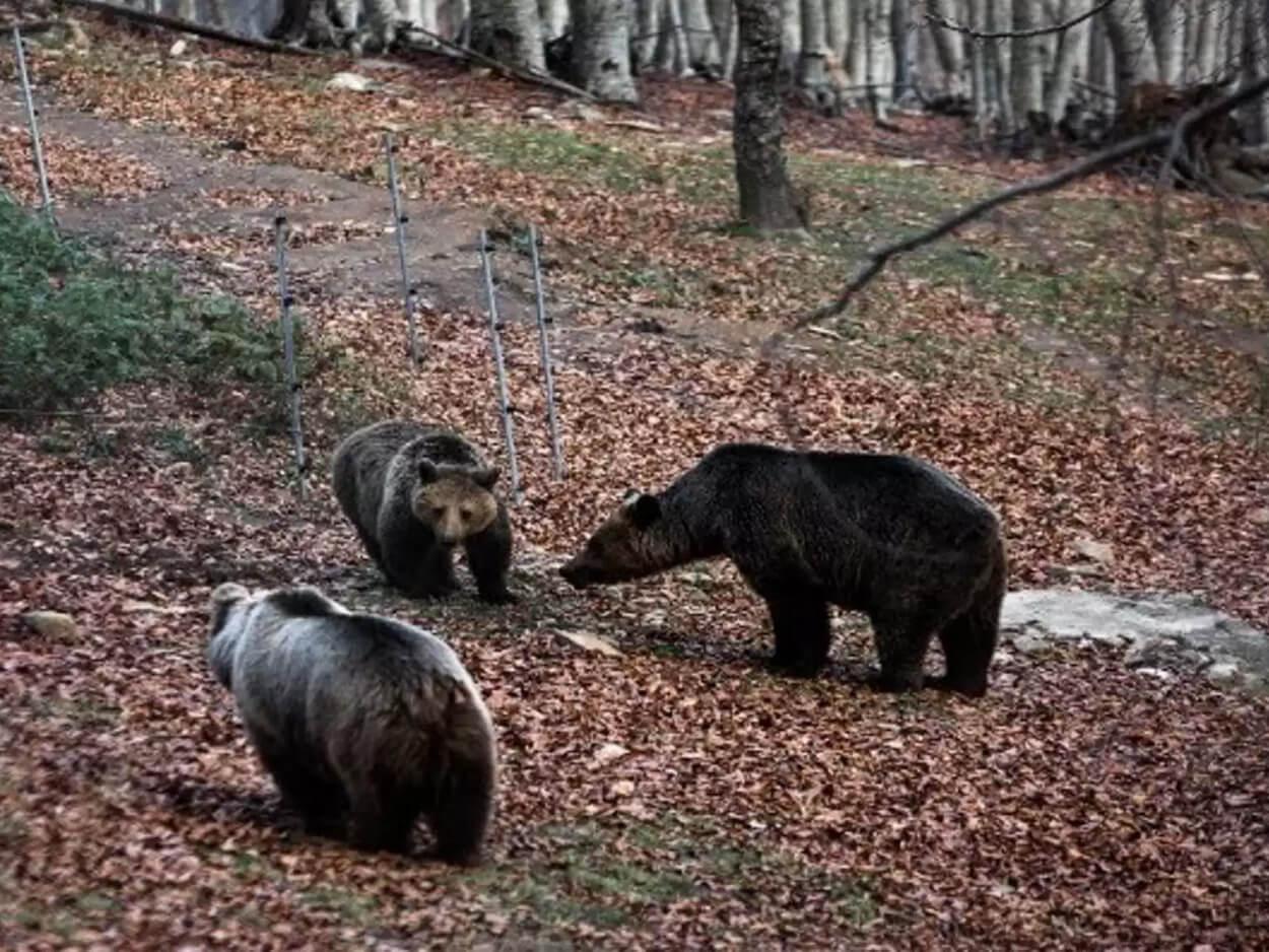 Νεκρή νεαρή αρκούδα
